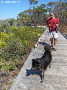 Walking Polly and Taggart on the campground boardwalk