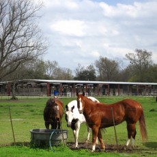 CP Campground Review – Farr Park Equestrian Center & RV Campground, Baton Rouge, LA