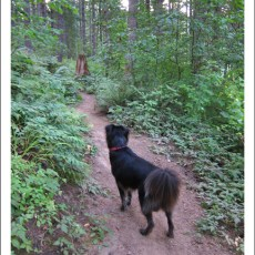 """SP Campground Review – L.L. """"Stub"""" Stewart State Park, Buxton, OR"""