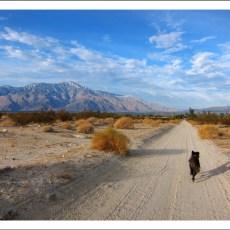 RV Park Rating – Sam's Family Spa (Desert HotSprings,CA)