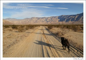 Walking Polly in our new back yard at Anza Borrego