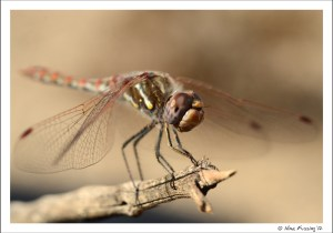 A dragonfly takes a break right outside our rig