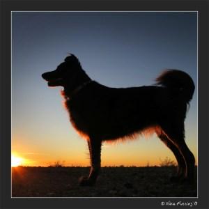 C-20130117 Sunset Yuma (19) (JPG)