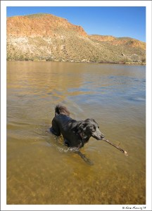 Doggie goes for a dip in Canyon Lake