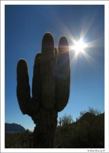 Saguaro spirit cactus?