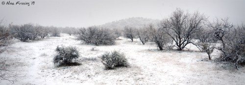 Surrounded by a winter wonderland...in the desert!