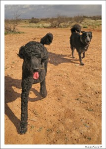 Happy doggies in the wilds