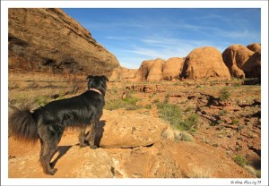 It can be quite gorgeous around here. On the Negro Bill Canyon Hike