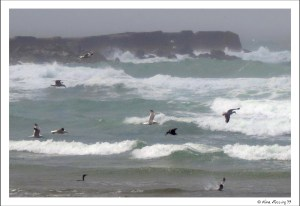 A lively day at the North Jetty