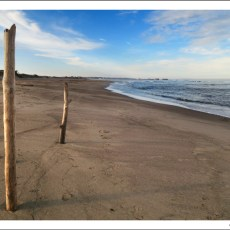 Just A Walk On The Beach (And A Few Life Musings…)