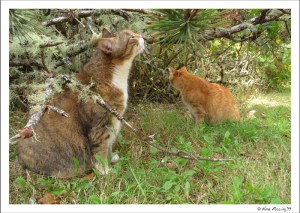 And just for good measure...a pic of the cats under their favorite tree