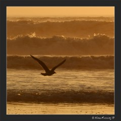 A bird silhouettes the waves