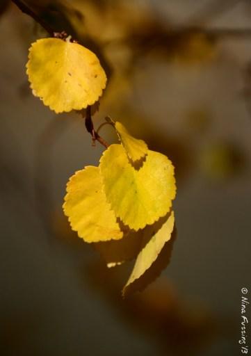 Ahhh, those gorgeous yellows!
