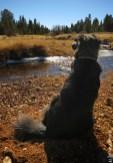 Polly contemplates the view
