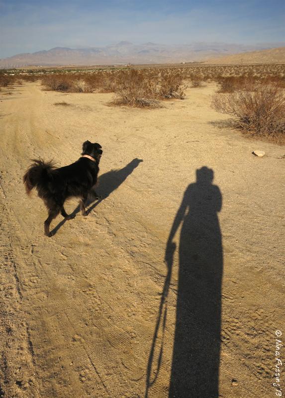 LOVE these AM walks