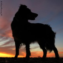 Another doggie silhouette
