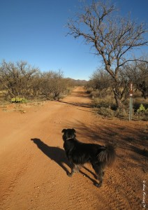 Polly poses in one of the more narrow dirt roads