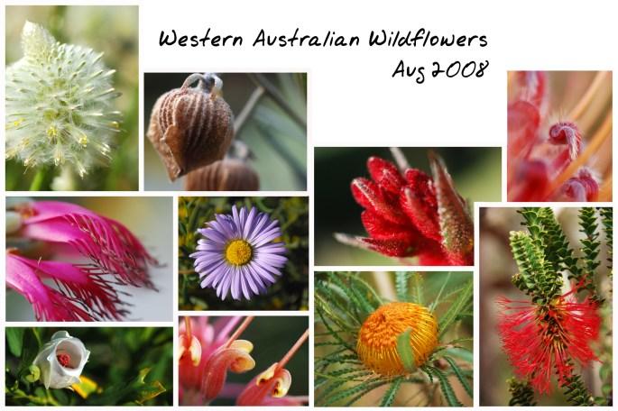 Wildflower Collage MOD-JPG
