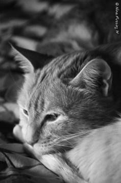 Kitties at rest....