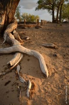 Trees, treeeeees!!!!
