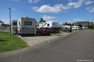 View down another typical row. RV in site #246 on left with #245 next to it.