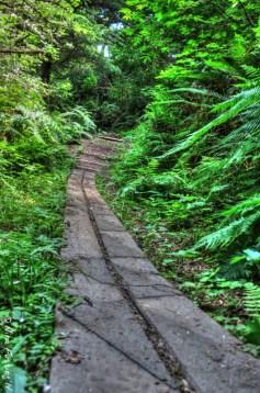 Green trails at Cape D
