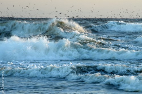 Textures of the sea