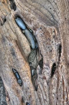 Driftwood art II