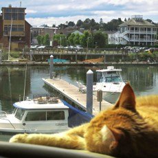 Harbor Campground Review – Point Hudson Marina, Port Townsend, WA
