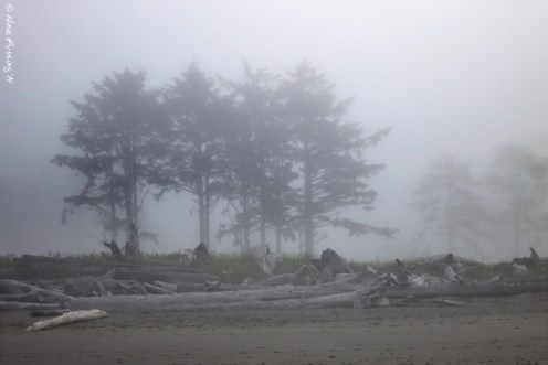 Typically foggy morning