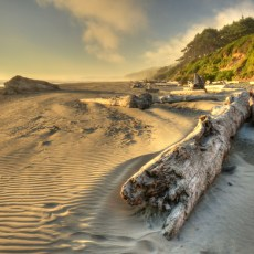 Squeeze Me And Yes, Please – Kalaloch, WA