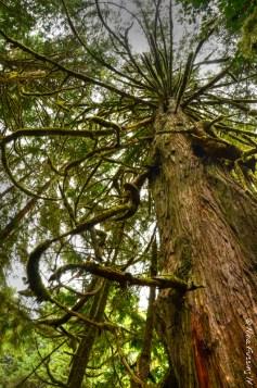 Fairy tale trees stretch eagerly towards the sun