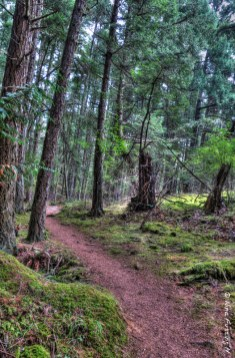 Thickly wooded trails at Obstruction Pass