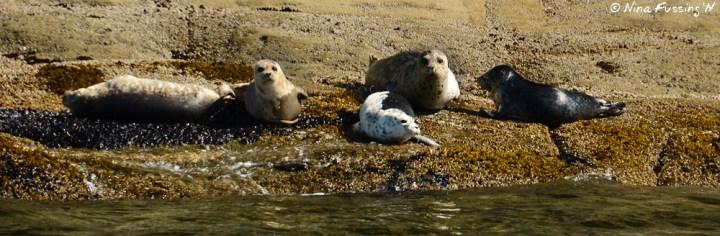 Sea Lions hanging at Patos