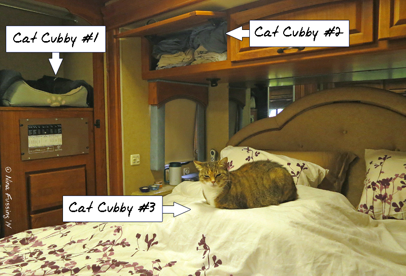 5 Tips For RVing & Camping With Cats – Wheeling It
