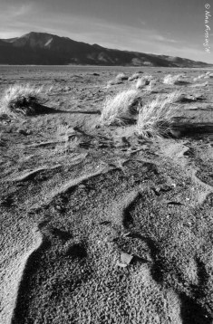 The wrinkled dryness of Washoe Lake