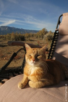 Kitty sunbathing