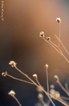Weeds in the desert