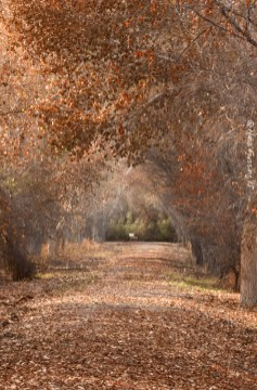 The covered path