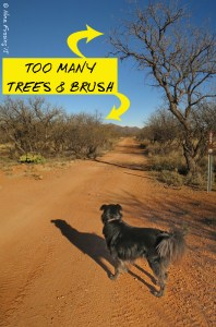 Way too many trees and tough brush on this narrow road for our size.