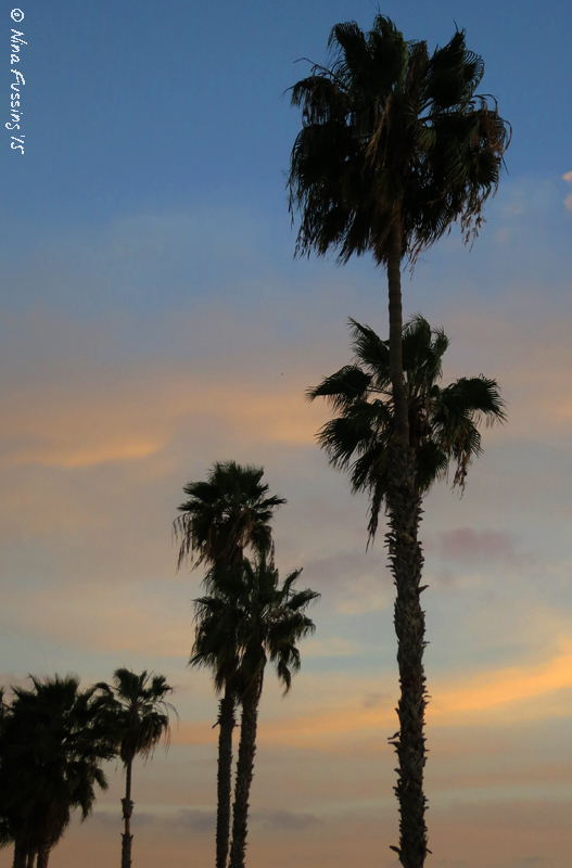 Evening palm trees on the bay