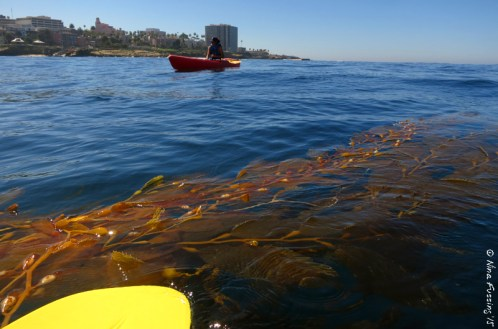 Giant Kelp is cooooool