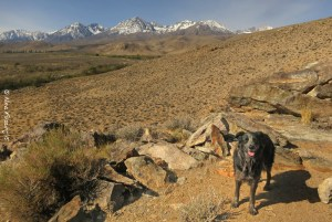 Hiking with Polly in the area behind the campground. Lots of space to hike here.
