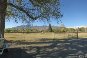 View of the HUGE doggie field area next to site #28