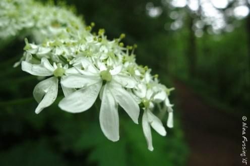 Wildflower beauty