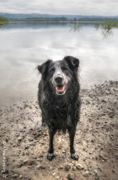 A happy, wet doggie at Sandy River