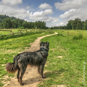 """Doggie Paradise"" at Sandy River Delta Park"