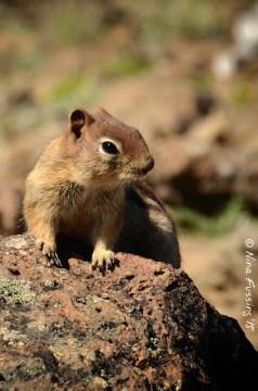 High mountain wildlife