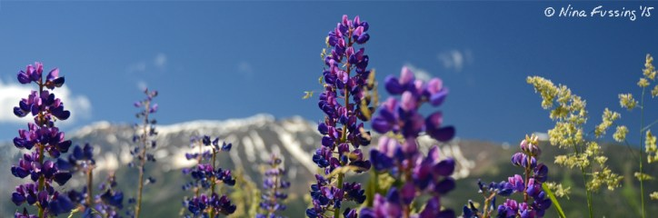 Flowers and mountains. It doesn't get much better than this.