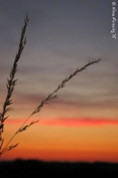 A serene sunset